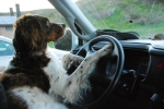 Angus in the driver's seat